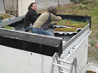 Green Roof Research - ICF Structure Greening 1
